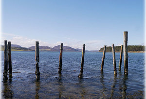 Loch Fleet with timbers in the foreground