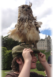 Owl perched on a boy's head at Dunrobin Castle